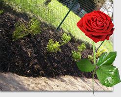 vysadba-zahrady